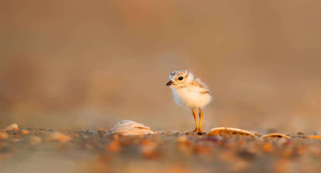 bird-1835615