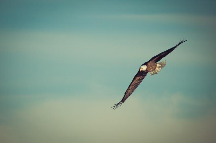 eagle-1029908_1920